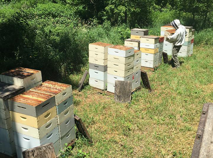 photo of beehives at Hendrycks Apiaries