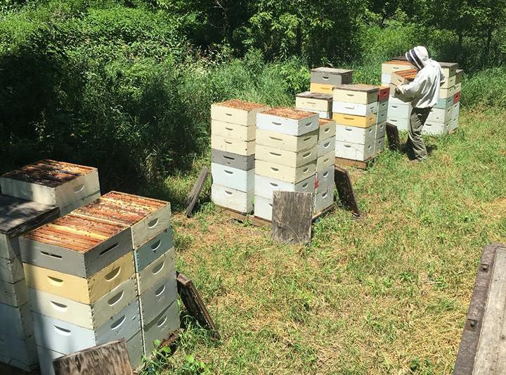 photo of beehives at Hendrycks Apiaries