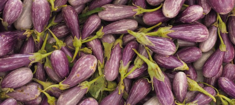 a photo of grilled eggplant