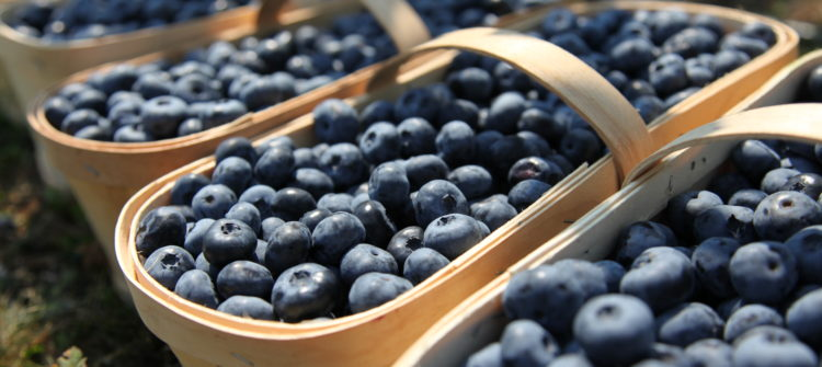 a photo of blueberries in baskets
