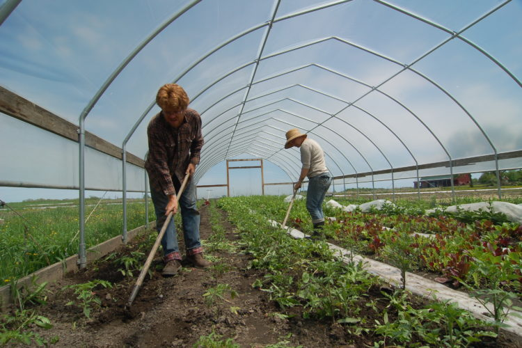 a photo of farmers working on East Henderson Farm