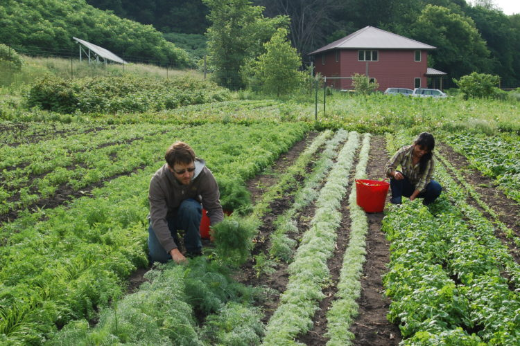 a photo of farmers working on Living Land Farm