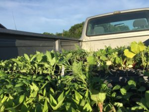 a photo of plants in the back of a pickup truck at Little Big Sky Farm