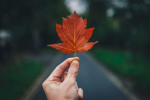 a photo of a hand holding a red leaf in front of a paved road